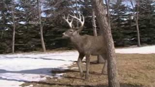 getlinkyoutube.com-Edward Sargeant - Deer Animation