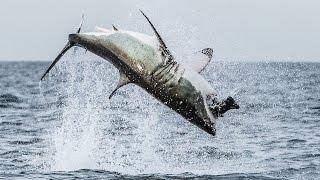 VIDEO. Imagini incredibile cu un rechin