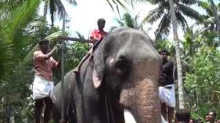 getlinkyoutube.com-Chirakkal Kalidasan Height