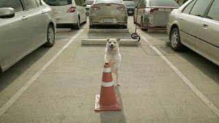getlinkyoutube.com-THE DOG : ธนาคารเกียรตินาคิน (Official HD)