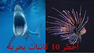getlinkyoutube.com-أخطر 10 كائنات بحرية