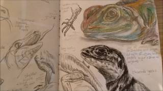 getlinkyoutube.com-GCSE ART A* FULL MARKS sketchbook exam topic