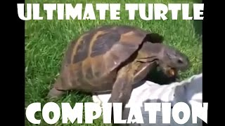 Turtle Has Sex With A Shoe Remix - Compilation