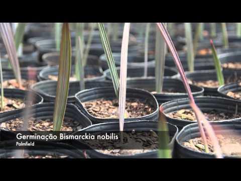 PALMFIELD - Produção de Palmeiras e Plantas Ornamentais