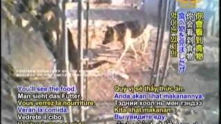 getlinkyoutube.com-09 20AW1832ストップ動物虐待 仔犬工場:犬達に途方もない苦難を産み出す