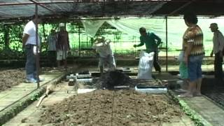 getlinkyoutube.com-Sustainable Community-based Commercialization of Organic Vegetables Part 3