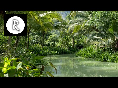 9 HOURS Rainforest │ Jungle Sounds