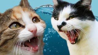 getlinkyoutube.com-Cats Vs. Water