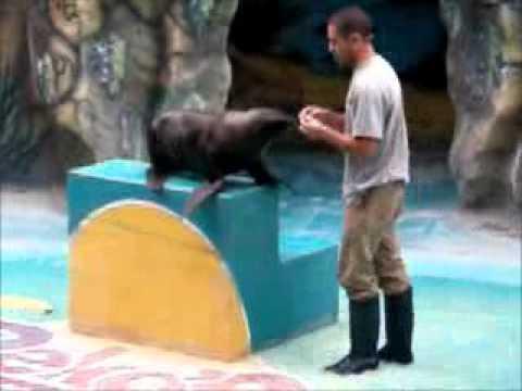 Mario Fredes. Gran Hermano 2012 Argentina- Show de lobos marinos en Carlos Paz