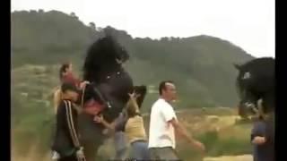 getlinkyoutube.com-اجمل ما رايته من تدريب الخيول