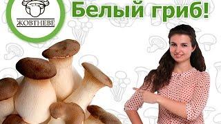 getlinkyoutube.com-Выращивание. Белый степной гриб.