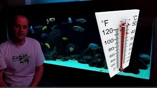 getlinkyoutube.com-African Cichlids - How Water Temperature Affects Their Behaviour