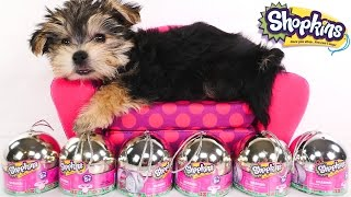 getlinkyoutube.com-Opening SHOPKINS with ZUMI - 6 Shopkins Surprise Egg Capsule Toys