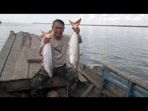 Câu Cá Bông Lau Sông Cổ Chiên của Cường5x cùng KhaĐầuBếp ngày 21/04/ 2014.