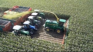 getlinkyoutube.com-Chopping 20 rows of corn with Kemper