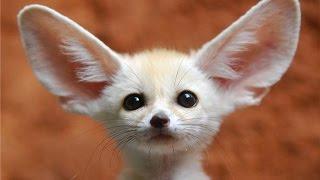 getlinkyoutube.com-Śmieszne zwierzęta. Kompilacja 2016 - HD - Śmieszne Filmiki