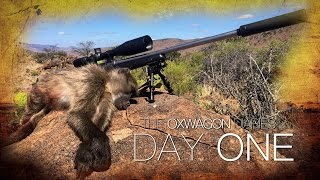 getlinkyoutube.com-Shooting Baboons from the Kitchen Window! | The Oxwagon Diaries - Day 1