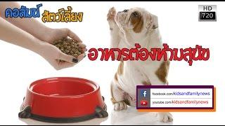 getlinkyoutube.com-อาหารต้องห้ามสุนัข
