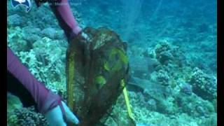 getlinkyoutube.com-Hand Collecting Butterflies in the Coral Sea
