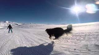getlinkyoutube.com-CUTE SKIING DOGGY 2015