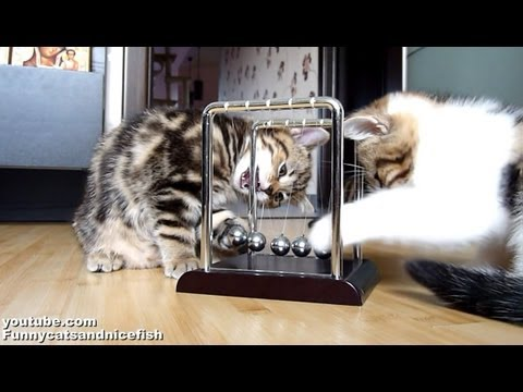 Kittens learn physics. 子猫 かわいい