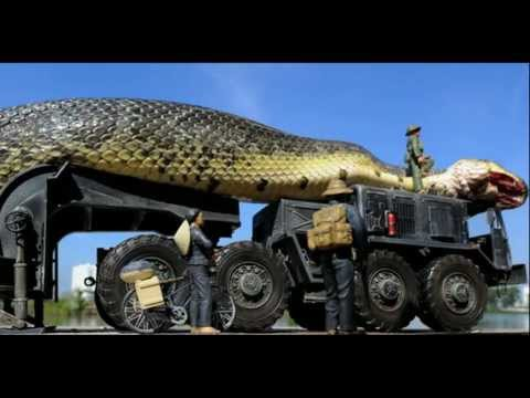 Amazing Giant Snake Found And Captured In The Red Sea #1