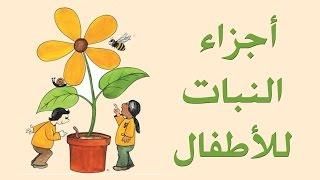 تعليم أجزاء النبات للأطفال