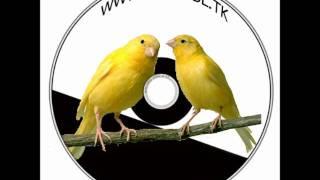 getlinkyoutube.com-CD-PJEV KANARINCA MALINO