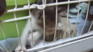 getlinkyoutube.com-保護猫~出せ!!ここから出せ!!