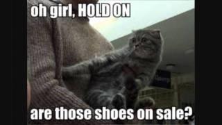 Really Funny Cats Youtube