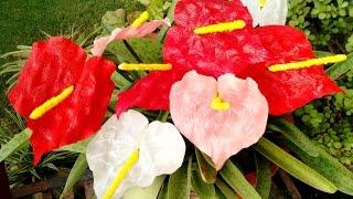 getlinkyoutube.com-Paper flower -  Anthurium (Flower # 59)