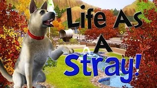 getlinkyoutube.com-Let's Play The Sims 3 Life As A Stray! Part 1! (A Friend??)
