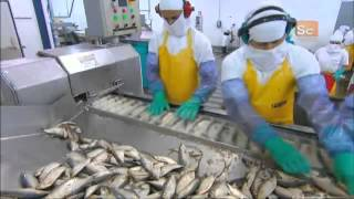 getlinkyoutube.com-How It's Made -  Canned Sardines