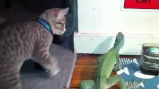 getlinkyoutube.com-Kitty Lizard Chase!