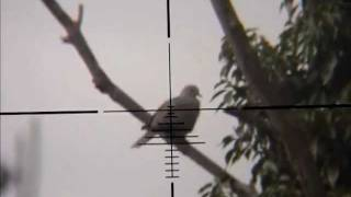 getlinkyoutube.com-air rifle hunting pigeon,magpie.