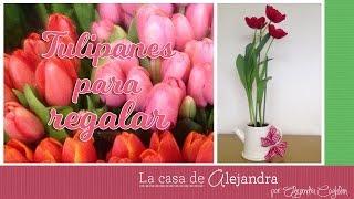 getlinkyoutube.com-Planta Tulipanes en Agua y Tierra - DIY Alejandra Coghlan