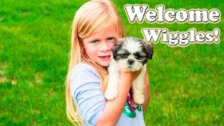getlinkyoutube.com-SURPRISE PUPPY Welcome to the Family Worlds Smallest Puppy Surprise TheEngineering Family Video