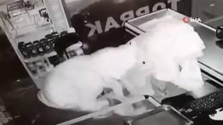 Kadın elbiseli hırsızlar market soydu