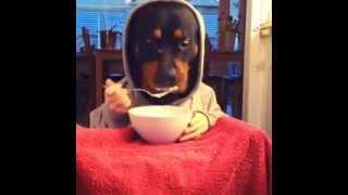 getlinkyoutube.com-Human Dog Eating!