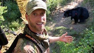 getlinkyoutube.com-Black Bear Hunting / Best Black Bear Archery Shot Ever!