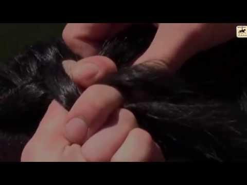 Como trenzar una dragonera de 4 cabos con tu caballo por Maria Roca- CAVA-Horse. junio 2013