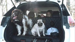Nissan X Trail 4Dogs - El coche perfecto para las aventuras familiares