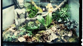 getlinkyoutube.com-Setting up a vivarium for a Pygmy Chameleon