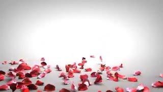 anh dong dep Effect Background rose petals falling Free Background Video Falling Rose Petals HD
