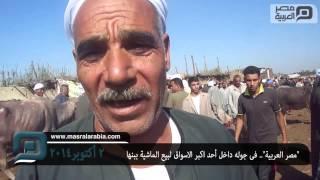 getlinkyoutube.com-مصر العربية | جوله داخل أحد اكبر الاسواق لبيع الماشية ببنها