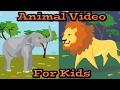 Animal Video for Kids