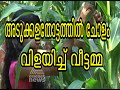 Housewive cultivate Maize at home  Asianet News Special