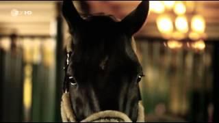 getlinkyoutube.com-Mission Gold: Millionengeschäfte auf dem Rücken der Pferde