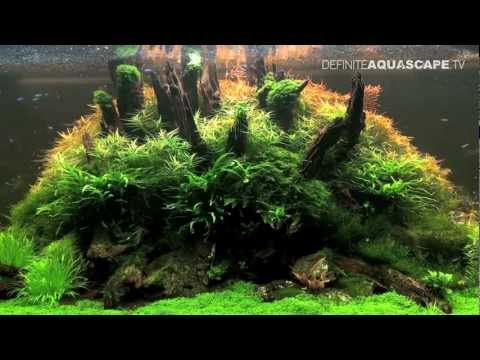 Planted aquarium 265x60x60 by roslinyakwariowe.pl