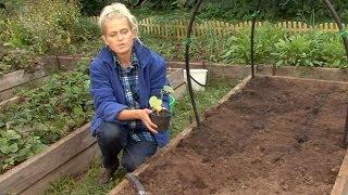 getlinkyoutube.com-Все о выращивании огурцов. Посадка семян и рассады огурцов в грунт.Часть 4